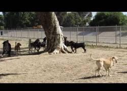 Enlace a La odisea que vivió esta ardilla para huír de los perros en una perrera