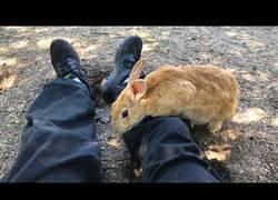 Enlace a ¿Te gustan los conejos? En esta isla de Japón está repleto de ellos