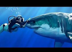 Enlace a Los tiburones son como perros