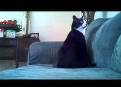 Enlace a Trolean a este gato mientras duerme y se despierta totalmente confundido