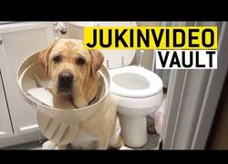 Enlace a Estos perros son culpables.. pero no quieren reconocer su delito