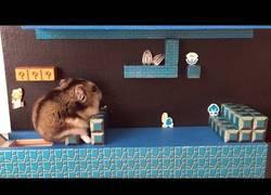 Enlace a Mario Bros versión Hamster