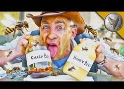 Enlace a Se mete en el nido de 30.000 abejas para probar su miel