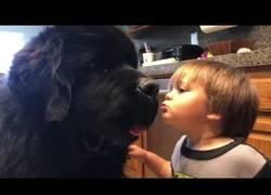 Enlace a El adorable momento en el que este niño le da un beso a su enorme perro