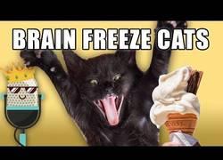 Enlace a Ponen voz humana a las actitudes de los gatos y es inquietante
