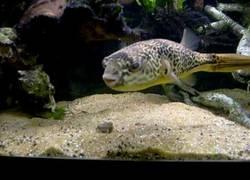 Enlace a Este pez tiene un estómago más exquisito que muchos humanos