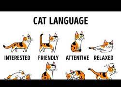 Enlace a Este vídeo te enseña a entender mejor a tu gato (Inglés)