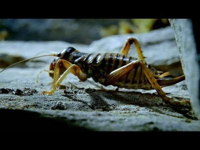 La increíble habilidad de supervivencia que ha desarrollado este insecto
