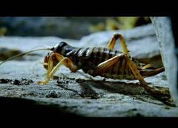 Enlace a La increíble habilidad de supervivencia que ha desarrollado este insecto