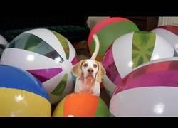Enlace a La genial reacción del perro Maymo al recibir su regalo sorpresa de cumpleaños