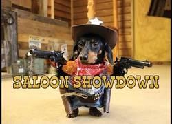 Enlace a Uno de los perros más duros que han pisado un Saloon del Oeste