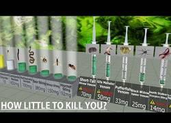 Enlace a Comparando niveles te toxicidad. ¿Cuánto se necesita para morir?