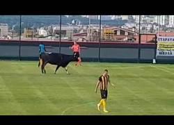 Enlace a Lo que pasa cuando estás tan tranquilo jugando a fútbol y un toro entra en el campo