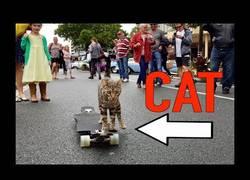 Enlace a El gato Boomer es el mejor skater de 4 patas que has visto últimamente