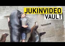 Enlace a Los vídeos más divertidos sobre focas y leones marinos