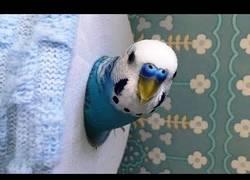 Enlace a Los pájaros y su eterna pelea con el papel higiénico