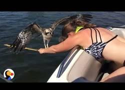 Enlace a Esta águila estuvo a punto de ahogarse pero se encontró con una mujer que dio hasta su sangre para s