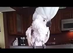 Enlace a El pájaro al que le gusta las canciones de Whitney Houston