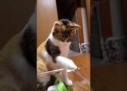 Enlace a Este gatito ha encontrado a su mejor amigo: una rana