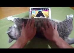 Enlace a Usa a su gato de joystick y él no puede estar más a gusto