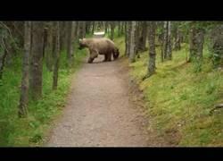 Enlace a Sale a dar un paseo por el bosque y a su vuelta le siguen una mamá oso con sus cachorros