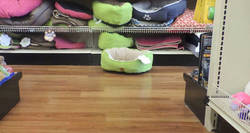 Enlace a Aparece un UFO en plena tienda de animales