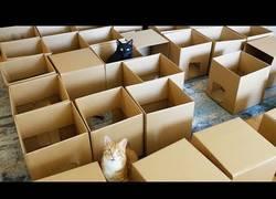 Enlace a Así de fácil es hacer feliz a un gato con 50 cajas de cartón