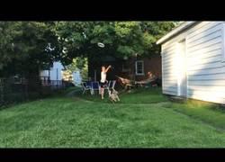 Enlace a No es fácil para un perro atrapar un frisbee