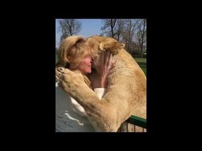 El reencuentro tras 7 años separados de esta mujer que adoptó a dos cachorros de león