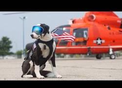 Enlace a Usan a este perro en un aeródromo para evitar la presencia de aves