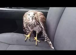 Enlace a La reacción de este halcón ante el huracán Harvey