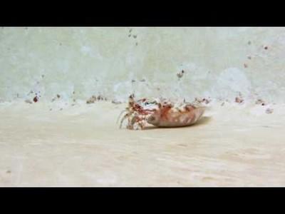No tengo tele! / Búsqueda de cangrejo en notengotele.com