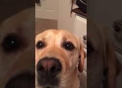 Enlace a Este perro hace los coros a su dueño cantando la mítica canción de Whitney Houston