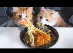 Enlace a Cocinando unos deliciosos Udon con la atenta mirada de sus gatos