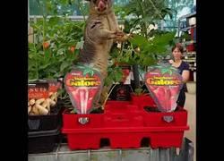 Enlace a Este adorable animal se acercó hasta una ferretería para comer de las plantas que venden