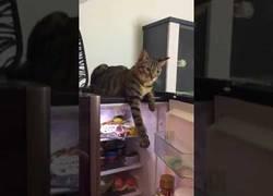 Enlace a A este gato le gusta sentir el fresquito de la nevera