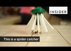 Enlace a Inventan el atrapa-arañas que sirve para atraparlas pero no matarlas