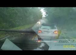 Enlace a A punto de morir los ocupantes de este coche tras caerse un árbol sobre ellos