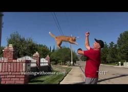 Enlace a Este tío tiene totalmente amaestrado a su gato