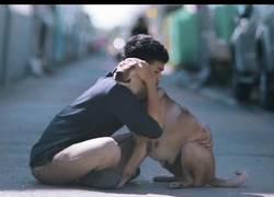 Enlace a Primer abrazo a perros callejeros