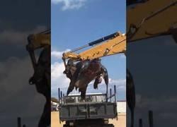 Enlace a Apareció una tortuga gigante muerta en las playas de Calella de 700kg