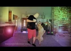 Enlace a Enseñando al perro a bailar merengue