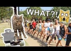 Enlace a Nuevo récord mundial: Este gato pasa por debajo de 20 personas en monopatín