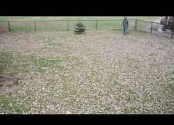 Enlace a El genial timelapse mientras recoge las hojas del jardín