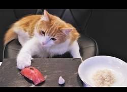 Enlace a Preparando sushi para gatos