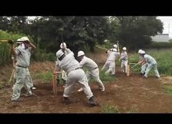 Enlace a La increíble habilidad de estos trabajadores japoneses