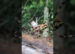 Enlace a La naturaleza es dura: así es como una araña caza a un sapo