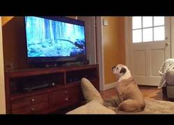 Enlace a Este perro trata de salvar a Leonardo DiCaprio en El Renacido