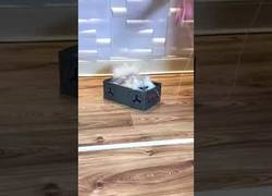 Enlace a Este gato es más feliz que nada con su caja de zapatos