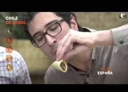 Enlace a Extranjeros prueban chiles mexicanos por primera vez.